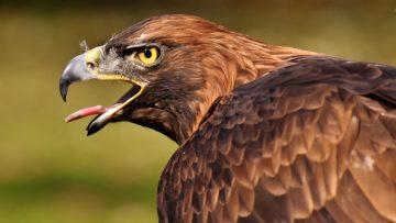 dravy-ptak