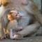 Roztomilé opičky