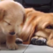 Nejroztomilejší psi a štěňata na světě