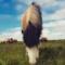 Roztomilá a zábavná videa koní