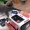 Zábavná videa pejsků a kočiček