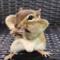 Legrační videa zvířátek
