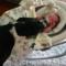 Nejrozkošnější zvířátka a kojenci 😍