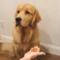 Zábavná videa úžasných zvířátek