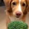 Viděli jste už takhle nadšeného pejska z brokolice?