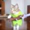 Řada roztomilých a zábavných kočiček