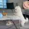 Nejroztomilejší domácí mazlíčci