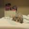 Nejroztomilejší a nejvtipnější videa koček