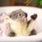 10 nejroztomilejších zvířátek