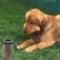 Úžasná videa domácích mazlíčků 😍