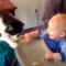 Roztomilé kočky a psi