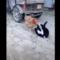 Vtipné momenty psů a koček