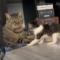 Nejvtipnější kočky a psi