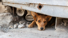 Unhappy homeless dog that lives underground