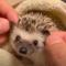 Výběr těch nejroztomilejších zvířátek