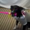 Nejvtipnější a nejbláznivější psí videa