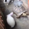 Nejroztomilejší okamžiky zvířat