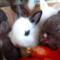 Nejzábavnější videa s králíky