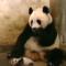 Ta nejlepší a nejvtipnější zvířecí videa roku 2020