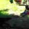 Ty nejlepší záběry domácích mazlíčků a dětí
