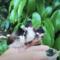Sledujte videa roztomilých zvířátek