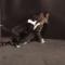 Nejlepší videa zábavných zvířátek