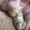 Výběr těch nejroztomilejších mazlíčků