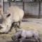 Roztomilé chvilky zvířátek