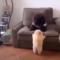 Výběr nejroztomilejších zvířecích okamžiků