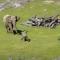 Sledujte tyto zábavné slony