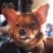 Nejlepší zábavná videa psů a koček, zkuste se nesmát!