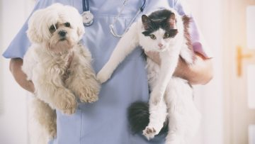 Vet,With,Dog,And,Cat,In,His,Hands