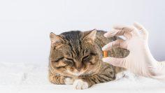 Cat,Pill.,Sick,Animal.,Vet.,Medicine,Cat,Give,The,Cat