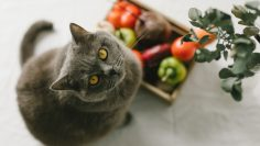 Still,Life.,Vegetables,On,The,Kitchen,Table,And,A,Beautiful